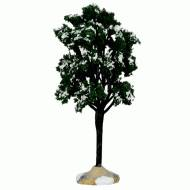 Balsam Fir Tree, Large