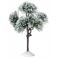 Mountain Pine Tree, 6 inch